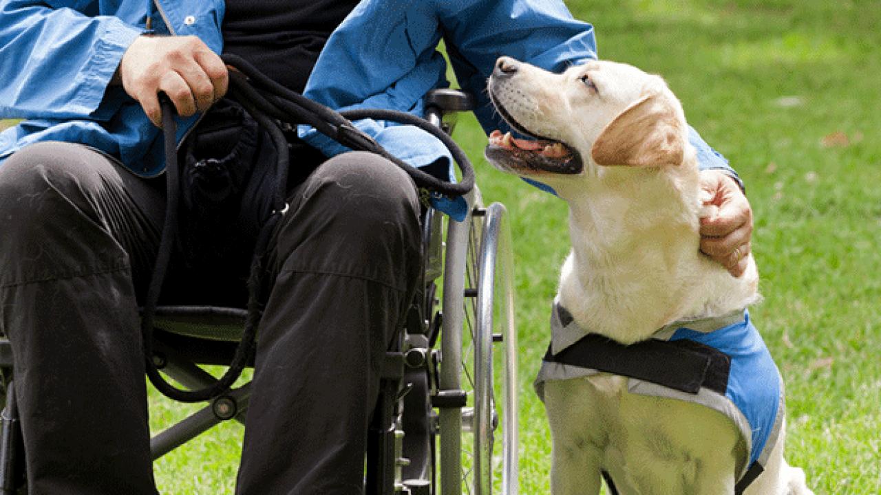 Atualmente, só os cegos têm o direito de acesso de seus cães-guia no transporte coletivo e em estabelecimentos